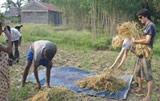 Témoignage écovolontariat Inde