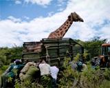 Ecovolontariat au Kenya