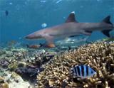 Début de la mission écovolontariat aux Fidji