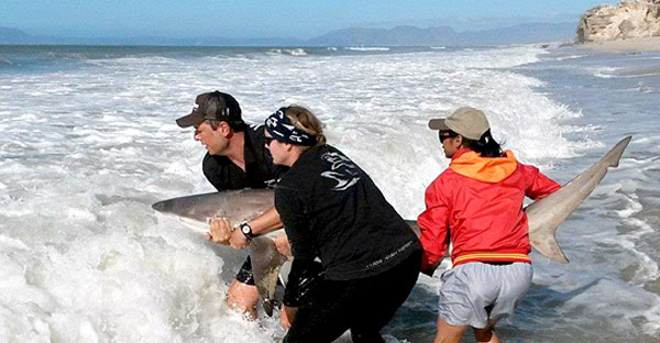 Nouveau projet protection des requins en Afrique du Sud