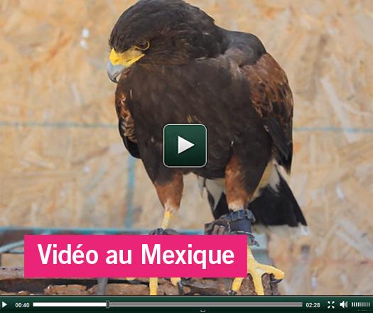 Nouvelle vidéo soins animaliers au Mexique