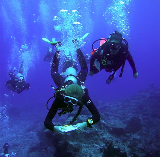 Devenez instructeur de plongée