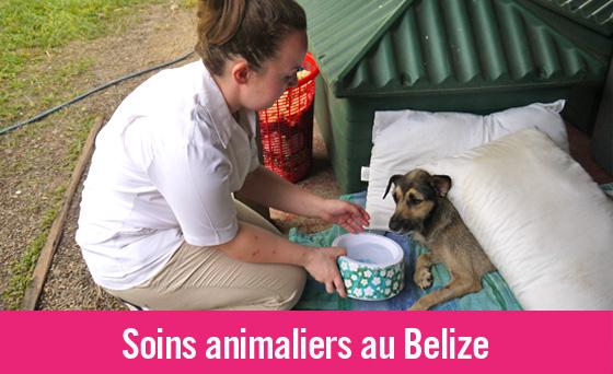 Nouvelle mission en soins animaliers au Belize