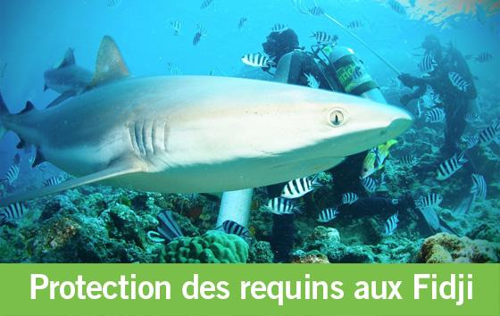 3 ans de protection des requins aux Fidji