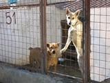 Médecine vétérinaire en Argentine