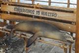 Rejoignez nos missions au Galapagos!