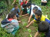 Argentine: agriculture communautaire