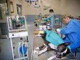 Témoignage  soins animaliers Afrique du Sud
