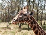 Écovolontariat au Kenya