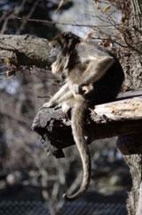 Projet Caraya pour préserver les primates en Argentine