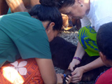 Soins animaliers aux Samoa