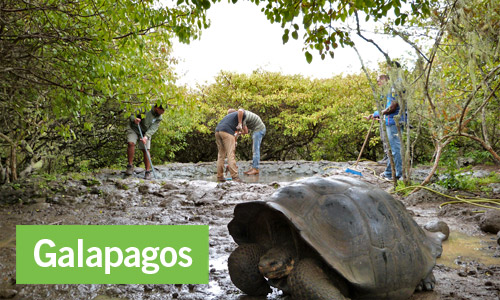Ecovolontariat en Equateur (Galapagos)
