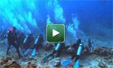 Protection des requins aux Fidji