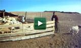 Projet Nomade en Mongolie