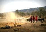 Projet Massaï en Tanzanie