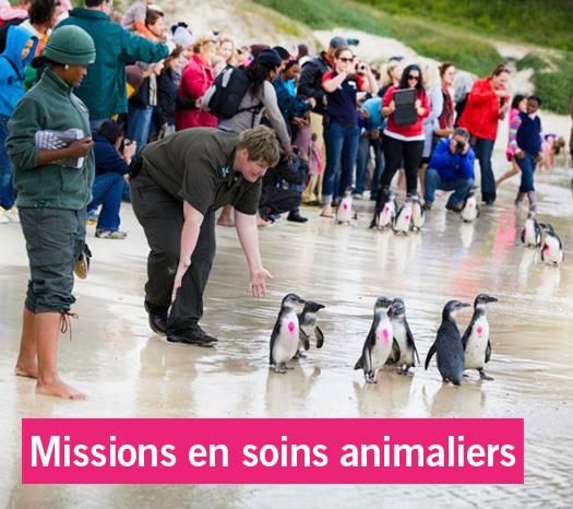 Zoom: Stages médecine vétérinaire et missions soins animaliers