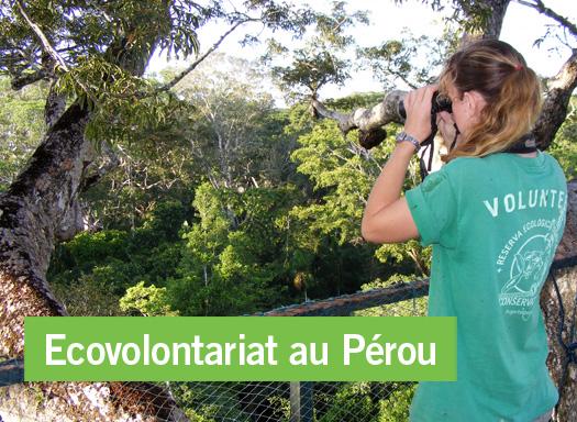Ecovolontariat au Pérou