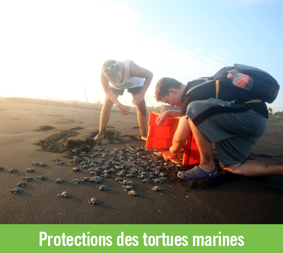 Protections des tortues marines
