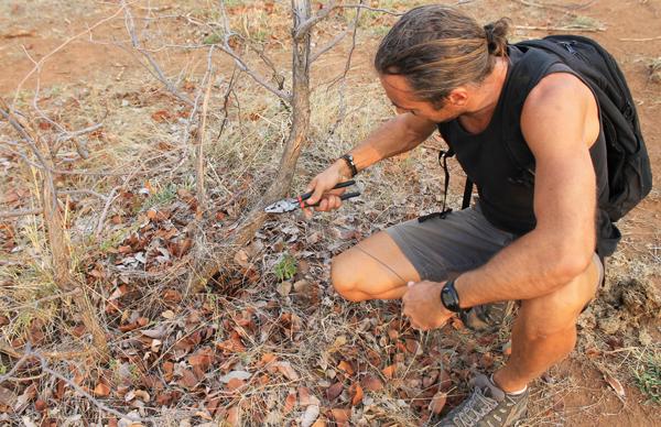 Ecovolontariat et environnement au Botswana