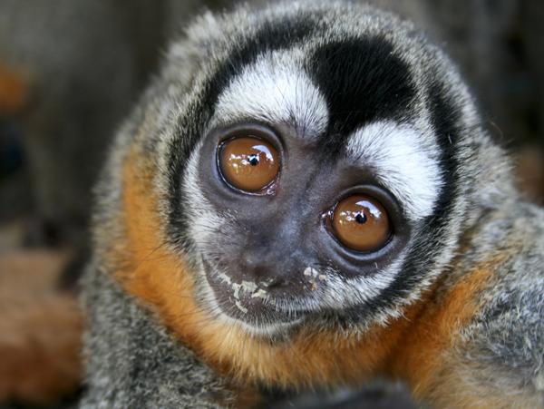 La plus grande libération d'animaux à Taricaya au Pérou